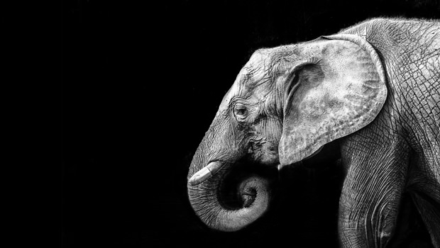 Facing the Elephant in the Room