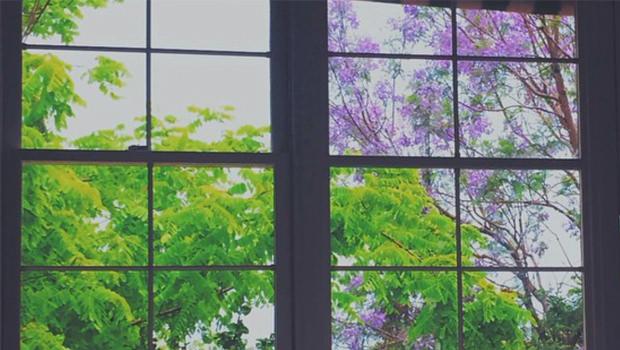 25 Jacaranda Trees